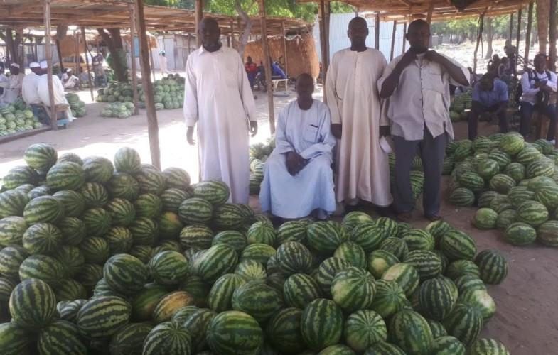 La pastèque : une nouvelle habitude alimentaire qui créée des activités lucratives