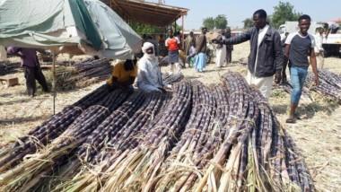 Société : la vente de la canne à sucre créée plusieurs activités à N'Djaména