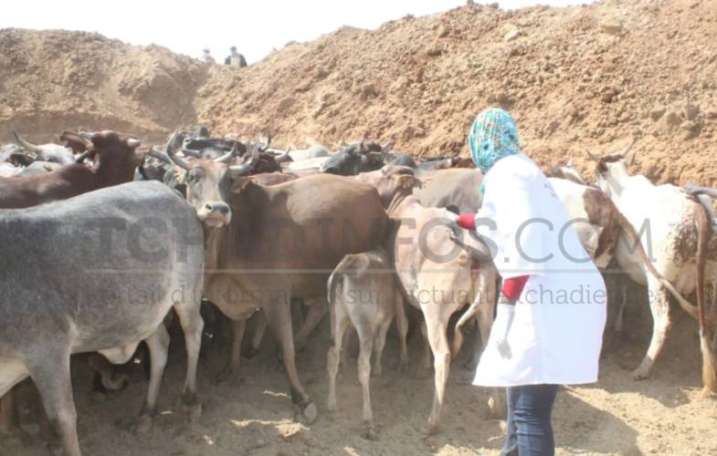 Elevage : les textes fondamentaux du secteur rural sont toilettés