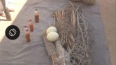 Protection de la faune : des braconniers arrêtés avec de l'huile et  des œufs d'autruche