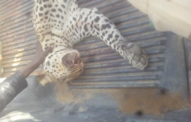 Tchad : ''la panthère  arrive certainement de Kousseri'' selon le ministre de l'Environnement