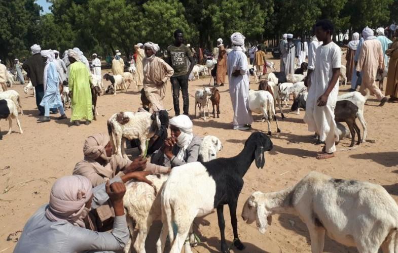 Tchad : marché de bétail hebdomadaire de koundoul, entre l'informel et  un rôle stratégique