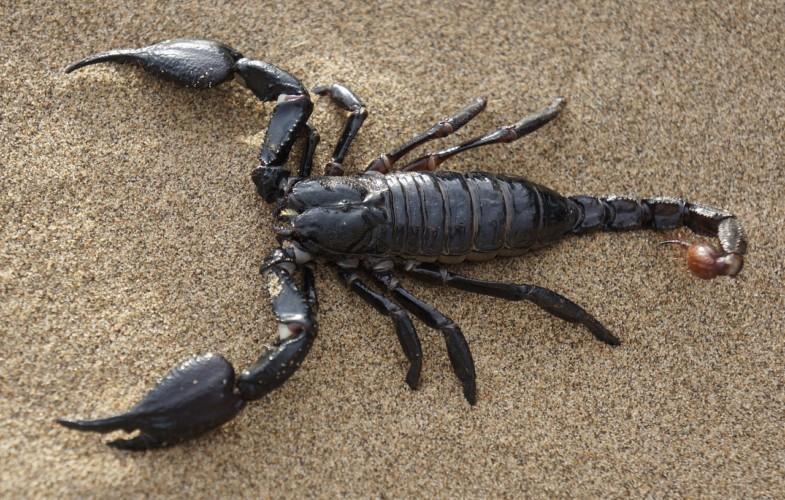Piqûre de scorpion : une ONG reconnue d'utilité publique au Tchad