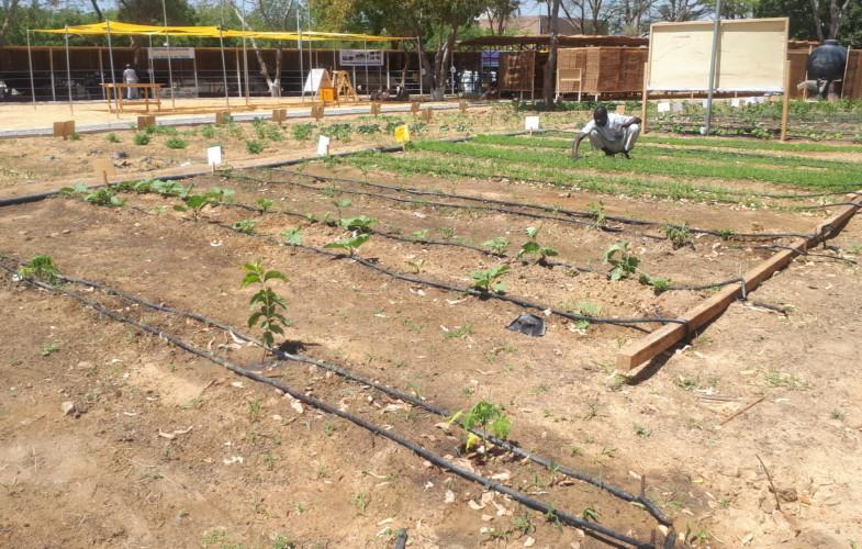 Safagri : irrigation par le goutte à goutte, à quoi sert-elle ?