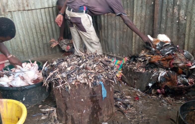 Société : déplumer les poulets, le nouveau gagne-pain des jeunes dans les marchés