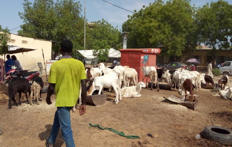 Ramadan : vente des moutons, les vendeurs crient à la crise
