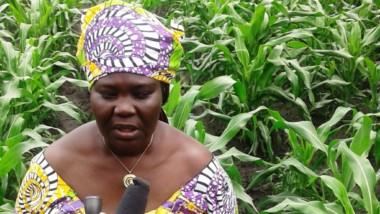 Tchad: la campagne agricole 2019-2020 semble prometteuse