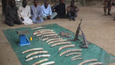 Tchad : trois présumés braconniers tuent neuf éléphants à Pala