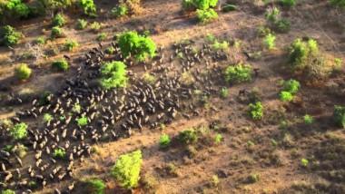 Tchad: le parc de Zakouma, plus bel endroit en 2019