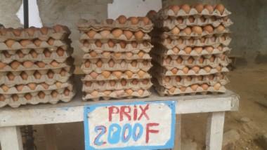 Société : pourquoi les Tchadiens préfèrent consommer des œufs produits au Cameroun ?