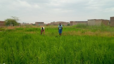 Tchad : l'agriculture devient un refuge pour les jeunes au chômage