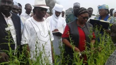 Tchad : la campagne agricole 2019-2020 dans la partie sahélienne s'annonce prometteuse