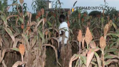 Mayo-Kebbi Est : un conflit agriculteurs-éleveurs  fait  un  mort, cinq blessés et plusieurs enfants disparus