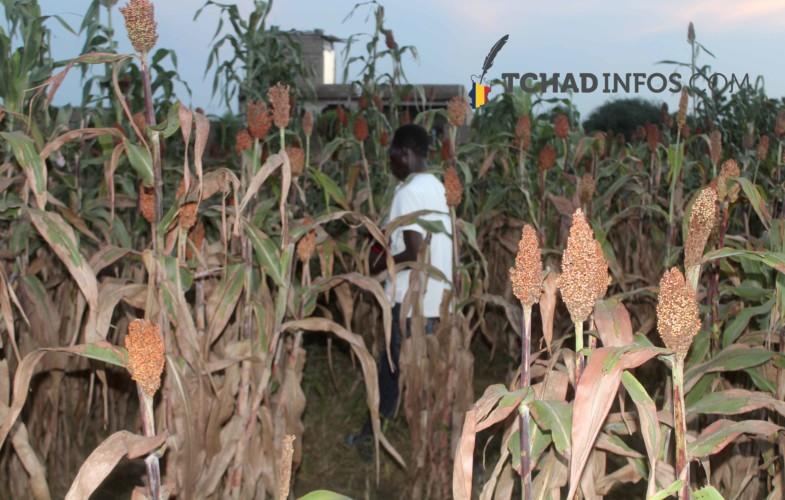 Société : la fin de la saison de pluie à N'Djamena n'est pas pour demain