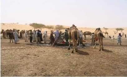 Elevage des dromadaires : le Tchad classé 1er au monde
