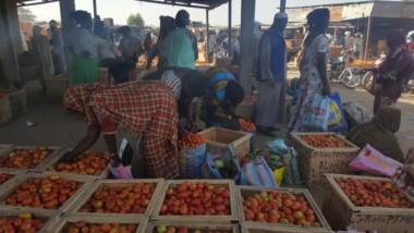 Santé : la tomate, une alliée bio contre le cancer