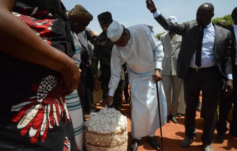 Tchad : le gouvernement accorde une subvention de plus de 3 milliards à la filière coton