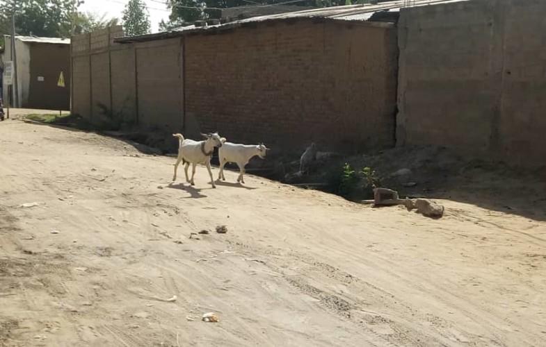 Divagation des animaux : où en est-on avec la décision de la Mairie ?