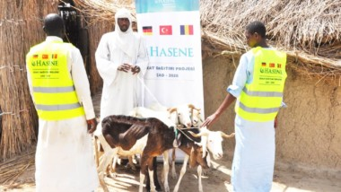 Tchad : l'ONG turque Hasene offre 550 moutons pour l'élevage à un village