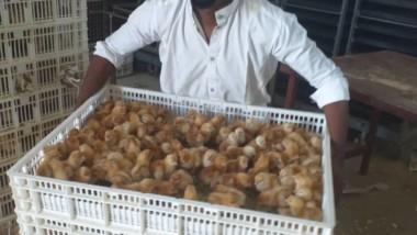 Entrepreneuriat : Madani Djamal ambitionne de faire de l'aviculture un levier de développement