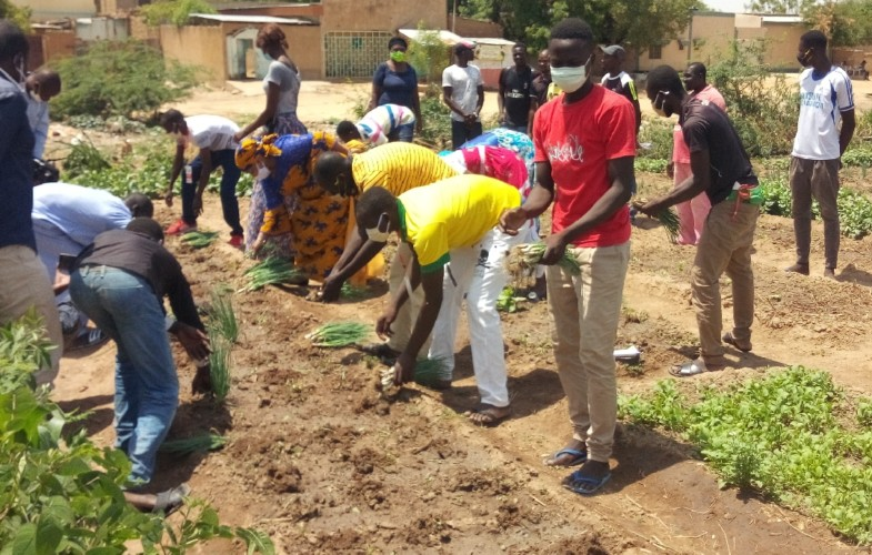 Tchad : la culture des potagers, une source de revenus pour les jeunes