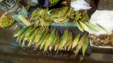 Tchad : les friands de maïs se régalent