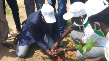 Tchad : Green earth va en guerre contre la dégradation de l'environnement