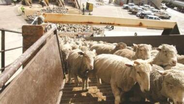Soudan : Le gouvernement veut achever la construction du port d'embarquement d'animaux vivants d'ici fin 2020