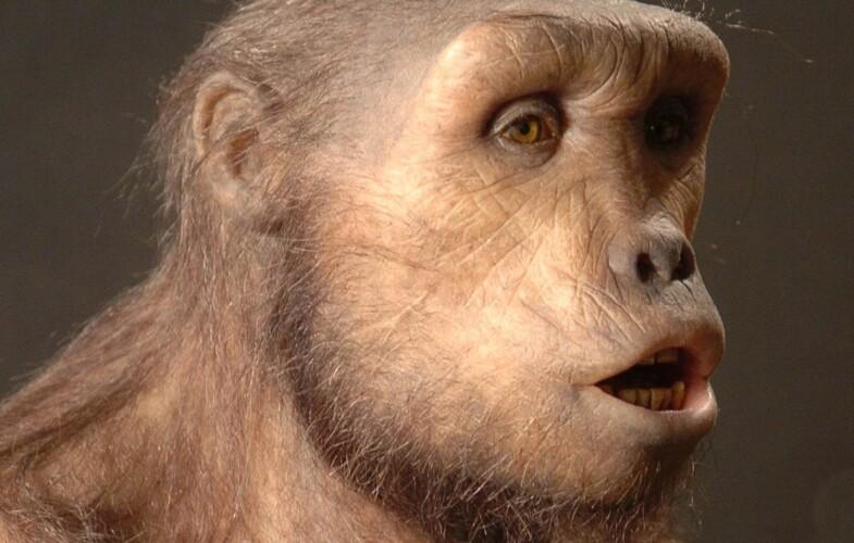 Rebondissement: «Toumaï était quadrupède, et non bipède» (étude paléoanthropologique)