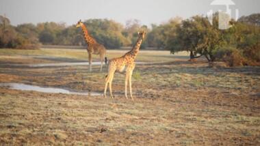 4e édition de Zakouma Youth Safari: au-delà du tourisme, c'est le vivre ensemble