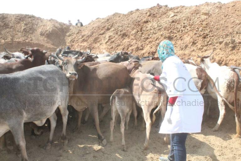 Coopération : le Tchad abritera le Centre régional de Santé animale