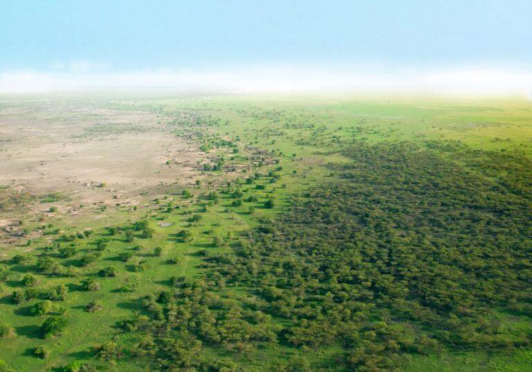 Sahel : 14 milliards de dollars alloués  à l'initiative de la grande muraille verte