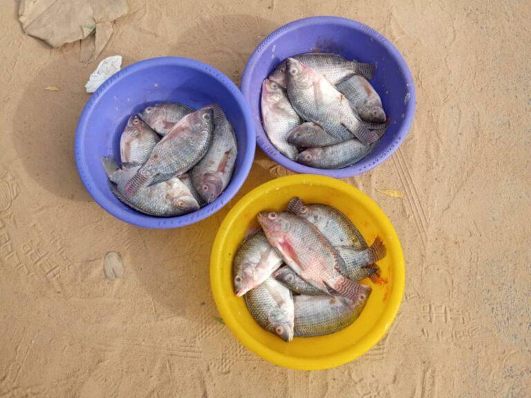 Tchad: le maire de N'Djamena interdit la vente de poisson au marché de Dembé