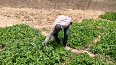 Ramadan : les jardiniers font déjà grimper les prix des légumes