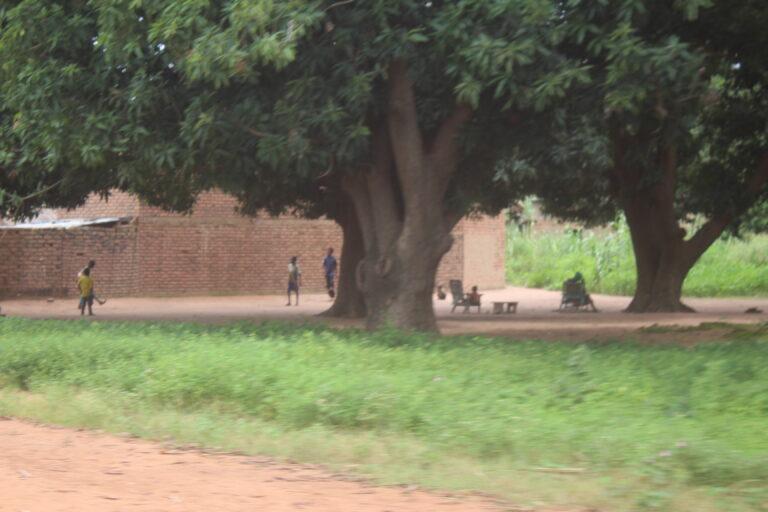Tchad : le Logone oriental perd ses potentialités fruitières