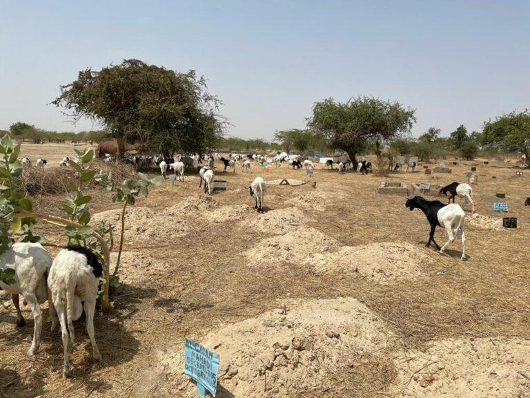 Une commission pour aménager et organiser le cimetière de Lamadji