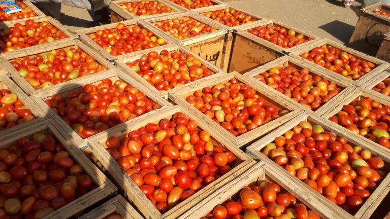 Cherté de vie : quand le prix d'achat de tomate fait grincer les dents