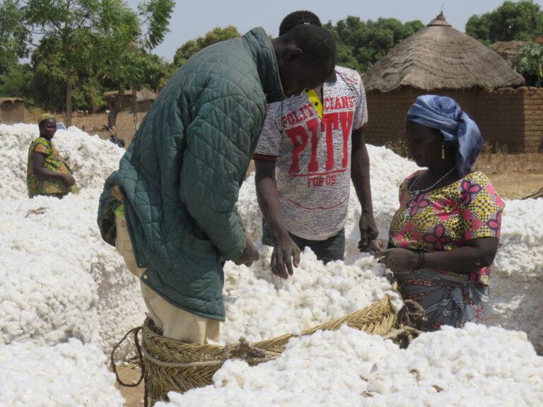 Tchad : Olam relance la filière coton