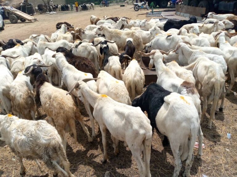 عيد الأضحى: وزارة الثروة الحيوانية تحذر من شراء الأضاحي الغير خاضعة للرقابة