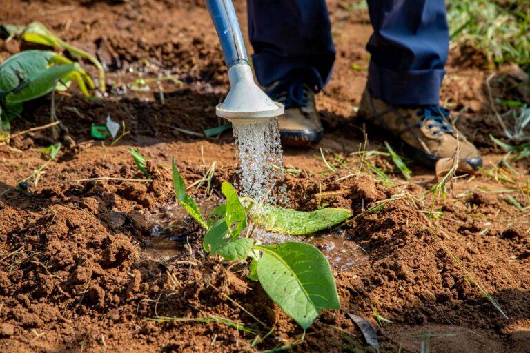 Sécurité alimentaire : les pays africains invités à promouvoir une agriculture inclusive et transformatrice