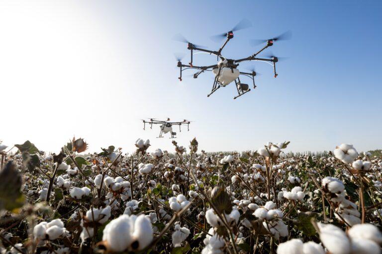 Agriculture : les jeunes Africains n'exploitent pas les technologies et les innovations faute de financement