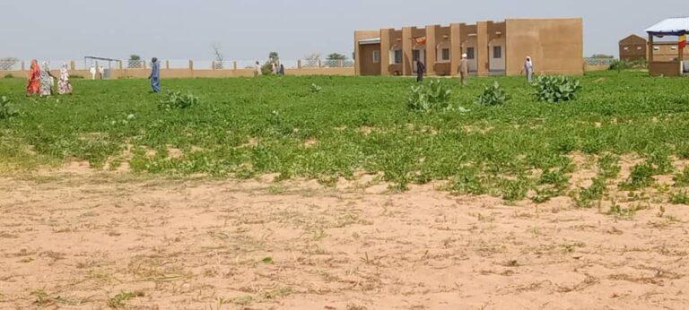 Tchad: le ministre de l'Elevage inaugure le marché à bétail de Koundjourou dans le Batha
